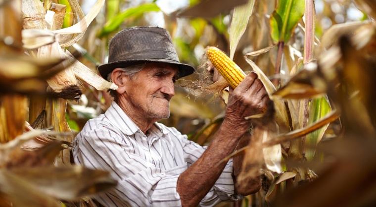 Agricultura cu fermieri de peste 60 de ani? Ce fac marile companii pentru a-i atrage pe tineri spre munca pamantului