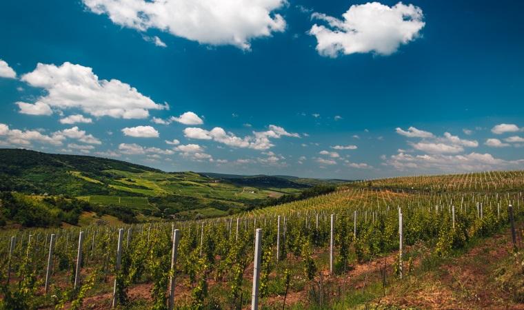 Vincon Romania estimeaza o crestere de 35% a vanzarilor de vin rose