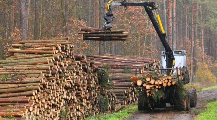 Aproape 40.000 de metri cubi de material lemnos confiscati si 1.800 de persoane cercetate pentru infractiuni silvice prin Radarul Padurilor