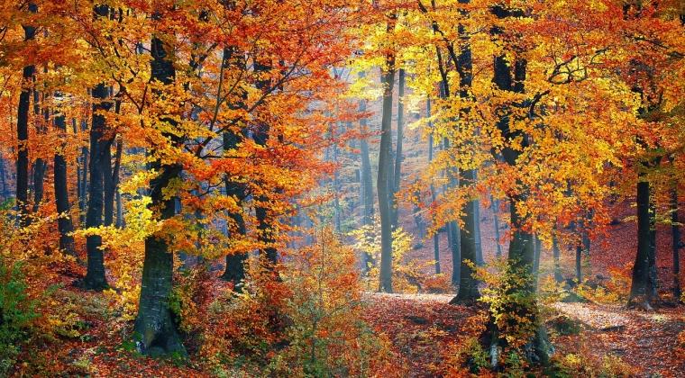 Romania este printre ultimele tari din UE la acoperire forestiera. 2,2 milioane hectare asteapta sa fie impadurite
