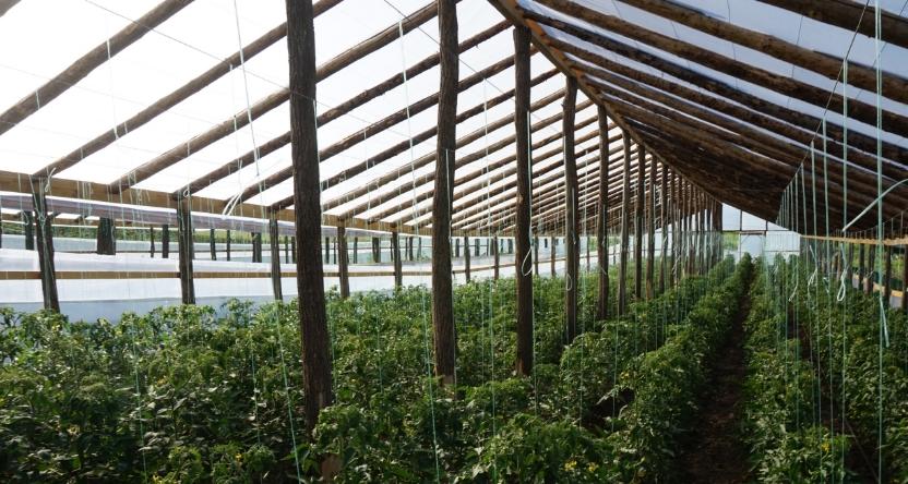Agricultura - Cum sa deschizi o ferma de legume bio: de ce ai nevoie ca sa incepi afacerea