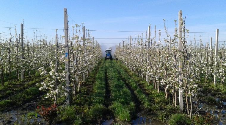 Agricultura - Afacere de milioane de euro in horticultura: ce planuri are un antreprenor din Vrancea
