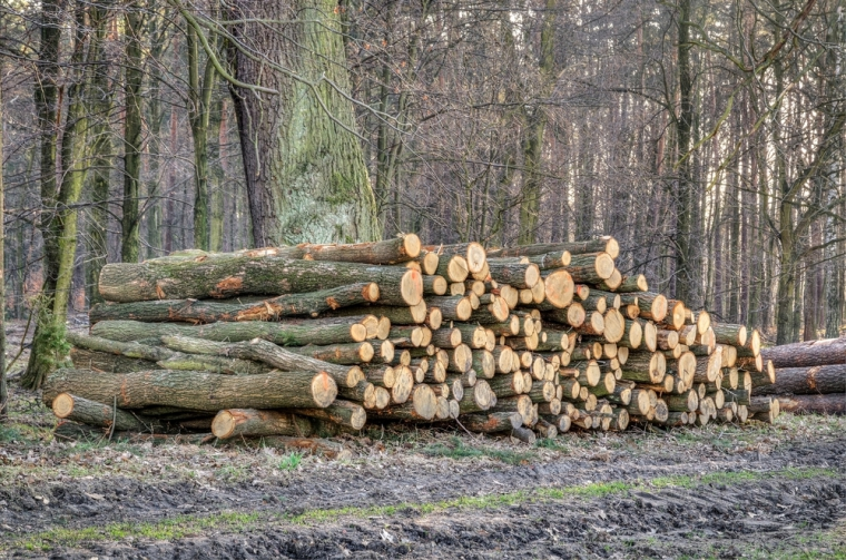 Tranzactiile cu produse la mana a doua au redus emisiile de carbon din Romania cu peste 1 milion de tone