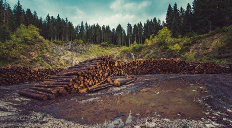 Social - Raport Greenpeace: Aproape 10.000 de cazuri de taieri ilegale de arbori au fost inregistrate anul trecut
