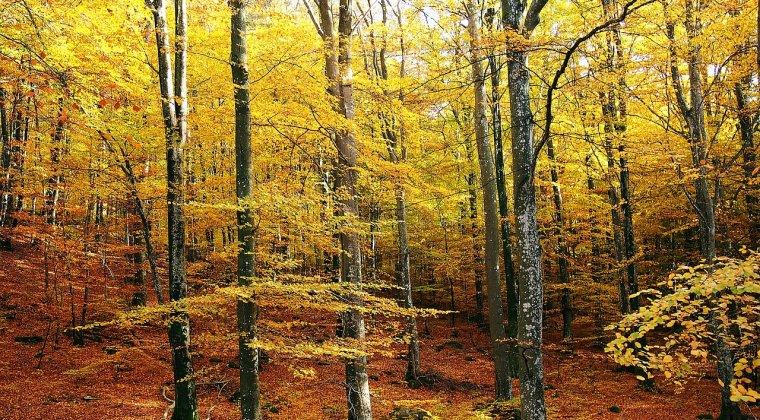 Peste 24.000 de hectare de paduri de fag din Romania au fost incluse in Patrimoniul Mondial Natural al UNESCO