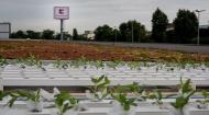 Agricultura urbana, o activitate tot mai raspandita printre oraseni. Un retailer pune la bataie spatii pentru pasionatii de gradinarit