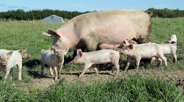 Administratorul fermei de porci detinuta de fiul lui Lividu Dragnea a fost retinut
