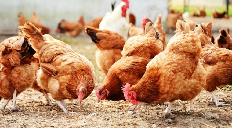 Topul judetelor cu cea mai mare probabilitate de evaziune fiscala din autoconsumul de oua