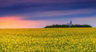 Ce judete au obtinut cele mai mari finantari pentru agricultura in campania 2017? Constanta, pe primul loc