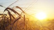 UE acorda 1 mld. euro pentru creditarea tinerilor care vor sa faca agricultura