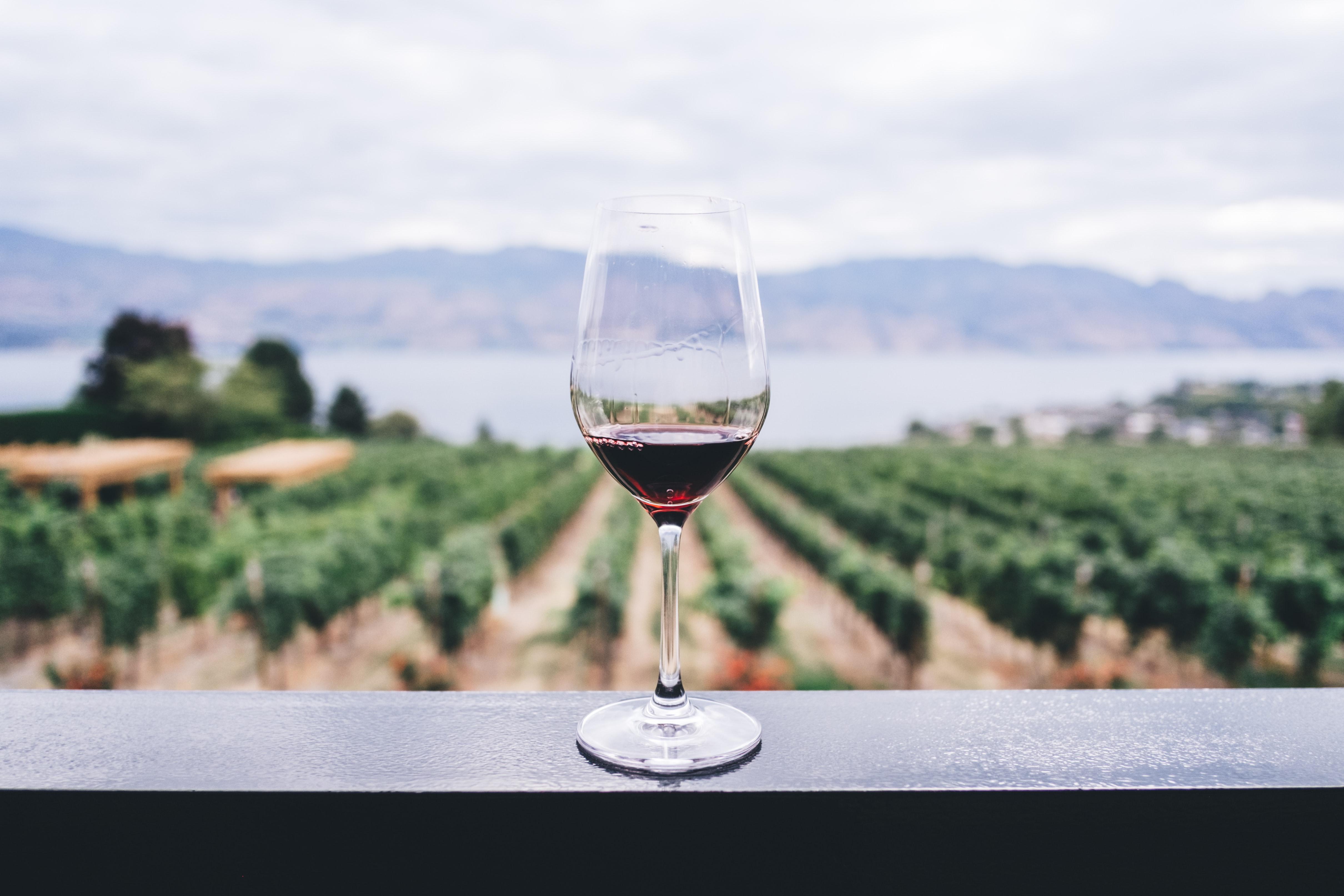 Desprevin.ro, platforma prin care utilizatorii pot vizita cramele viticole românești de acasă, a fost lansată