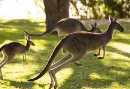 Efectele incalzirii globale si cutremurelor: Australia isi schimba locul pe harta GPS