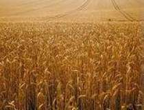 Plantele modificate genetic,...