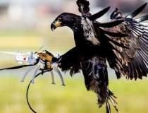 Vulturii anti-drone, folositi...