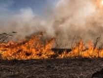 Incendiu in rezervatia Deltei...
