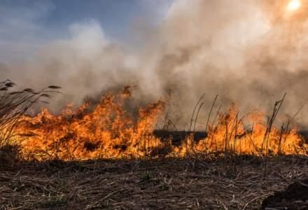 Incendiu in rezervatia Deltei Dunarii: sute de hectare de vegetatie au ars timp de 15 ore