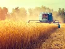 Exporturile de cereale ale...