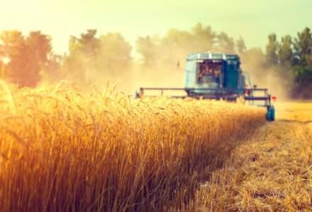 Exporturile de cereale ale Romaniei au scazut in primul semestru cu 9%, la 846 milioane euro