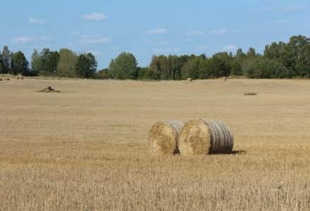 Capacitatea de depozitare a cerealelor din Romania a crescut cu 34% in ultimii cinci ani