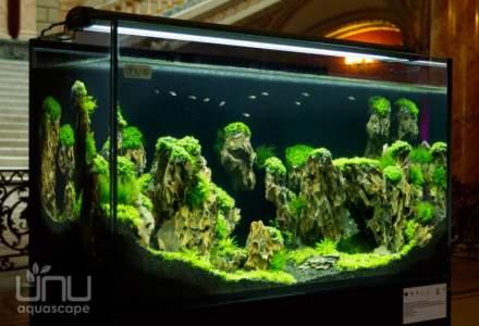 Un business inedit - cat se castiga din designul de...acvarii