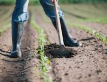 Sute de joburi in agricultura...