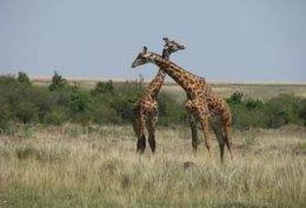 Kenya: Cum poti experimenta intoarcerea la natura