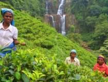 Turist in Sri Lanka: cum am...