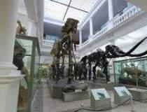 Muzeul Antipa din Capitala se...
