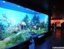 Muzeul Antipa si-a redeschis...