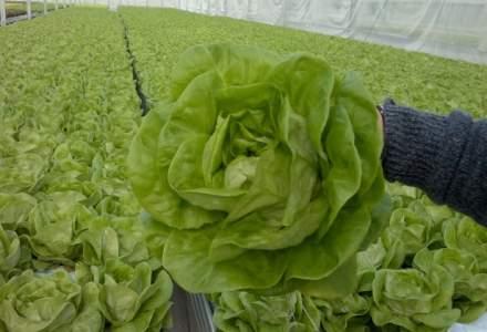 Din constructii in agricultura: a lansat o afacere cu salate care ii aduce vanzari de 2 milioane lei