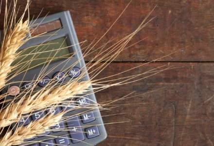 Coface: Tot mai multe procese impotriva firmelor care cultiva cererale; crestere de 78% in 2016