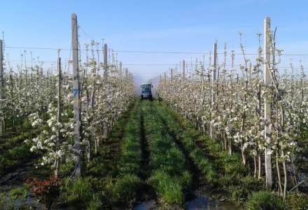 Afacere de milioane de euro in horticultura: ce planuri are un antreprenor din Vrancea
