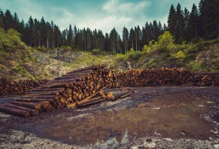 Raport Greenpeace: Aproape 10.000 de cazuri de taieri ilegale de arbori au fost inregistrate anul trecut
