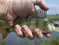 Canicula ucide pestii: o tona...