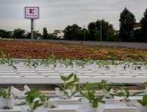 Agricultura urbana, o...