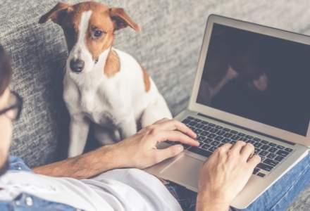 Laptopuri la reducere: 3 modele ale caror preturi sunt cu pana la 33% mai mici