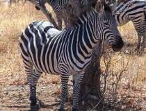 Vacanta in Tanzania si...