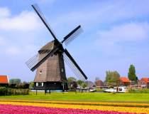 Olandezii vor sa interzica...