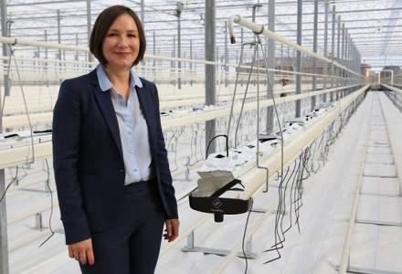 Sera de 16.000 mp la Biled, Timis: Rosiile, experienta olandeza si fondurile europene
