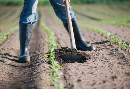 Locuri de munca in strainatate: cat poti sa castigi daca lucrezi in agricultura