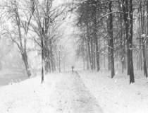 Cum va fi vremea iarna...