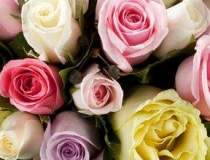 Vanzarile online de flori...