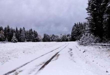 COD PORTOCALIU SI GALBEN de ninsori pana pe 14 februarie