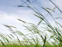 Dezvoltare rurala de 10 MLD....