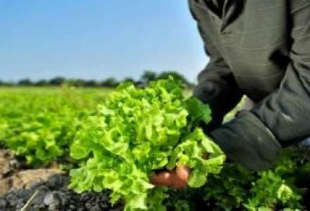 Strategie Grains a redus estimarile pentru recoltele de cereale din toata UE