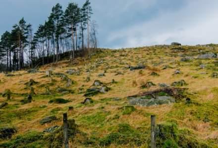 Afaceri cu lemn: Judetele din Romania cu cele mai mari scaderi ale suprafetelor de paduri