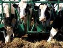 Productia de produse lactate,...