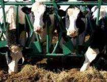 Productia de lapte de vaca a...