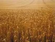 Combaterea secetei costa 1,5...