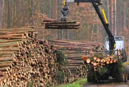 Perchezitii DIICOT la un mare exportator de lemn: Holzindustrie Schweighofer